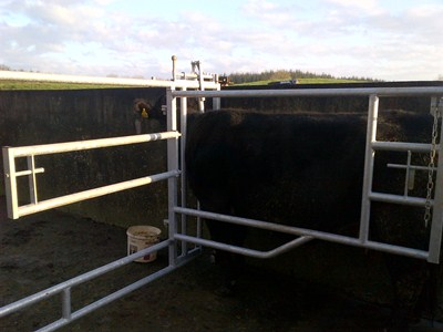 Calving gates for cow