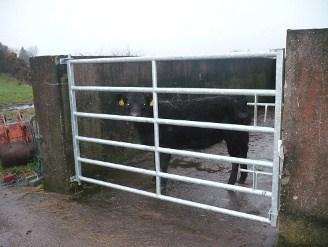 Heavy Duty Gates roscommon
