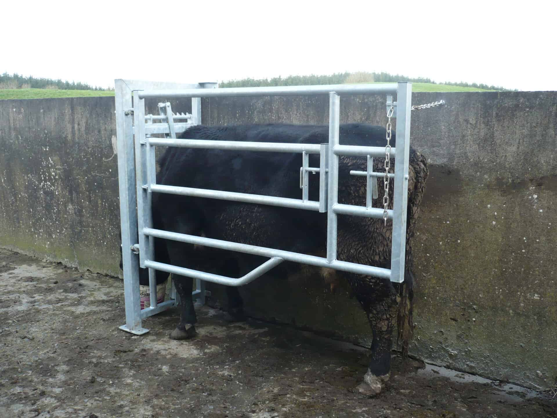 calving gates